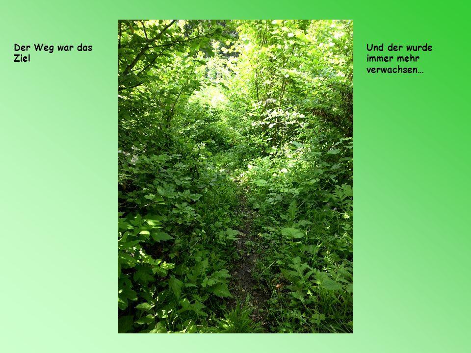 Der Weg war das Ziel Und der wurde immer mehr verwachsen…