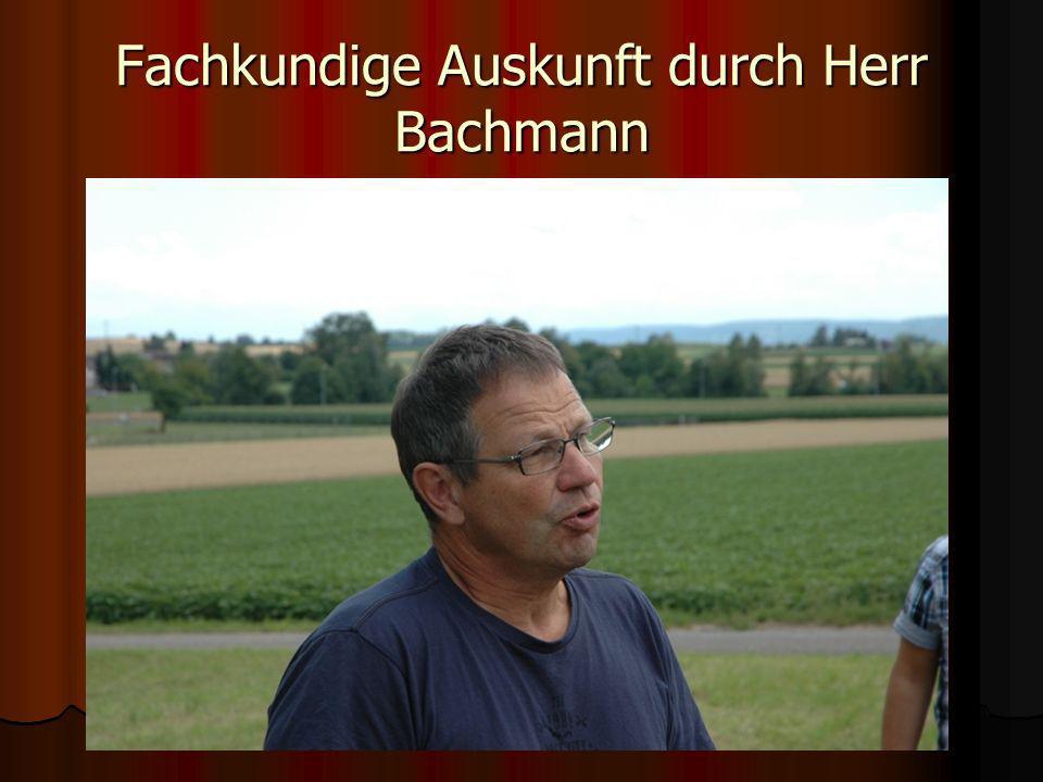 Fachkundige Auskunft durch Herr Bachmann