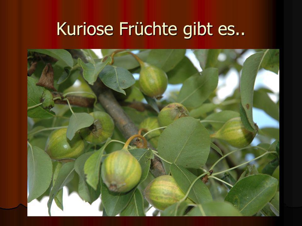 Kuriose Früchte gibt es..