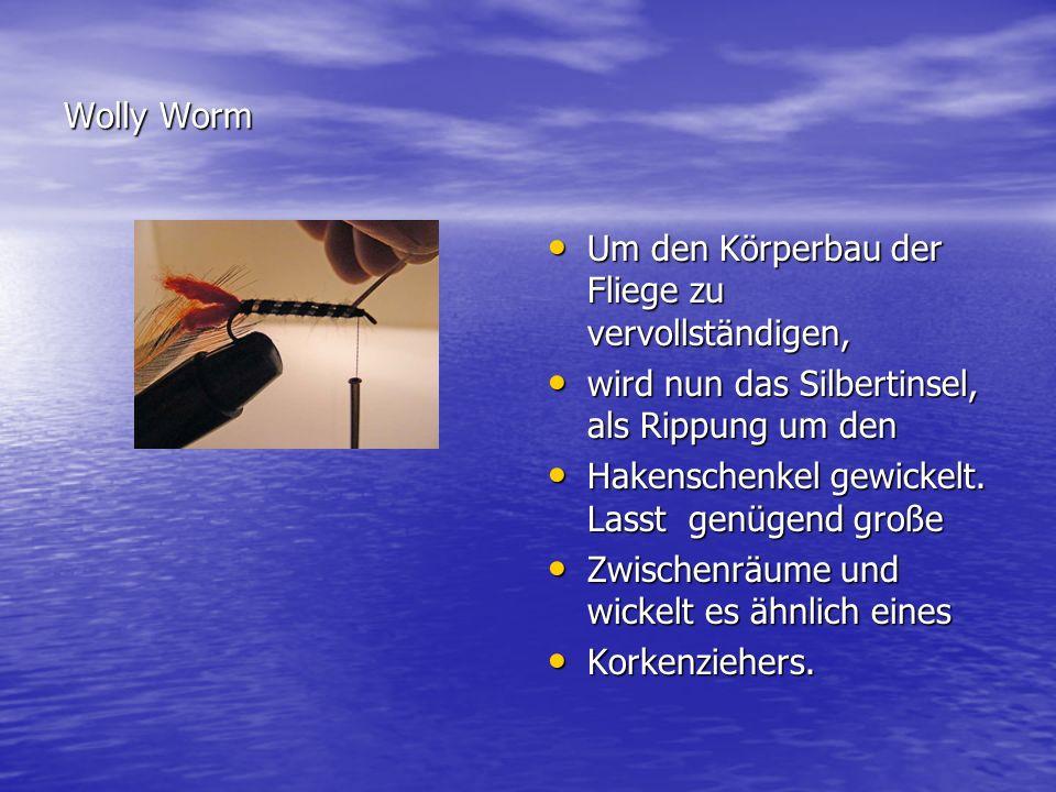 Wolly Worm Um den Körperbau der Fliege zu vervollständigen, wird nun das Silbertinsel, als Rippung um den.