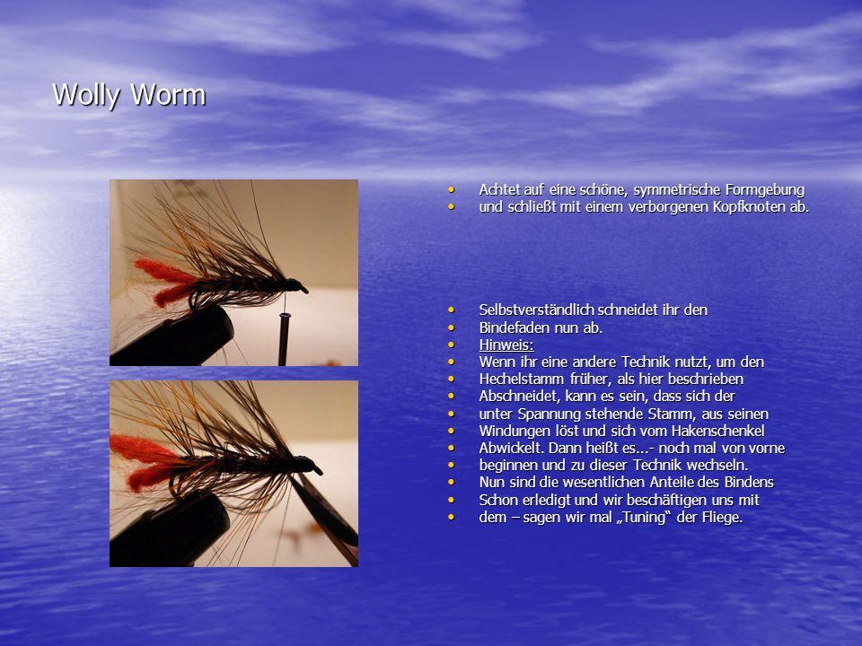 Wolly Worm Achtet auf eine schöne, symmetrische Formgebung