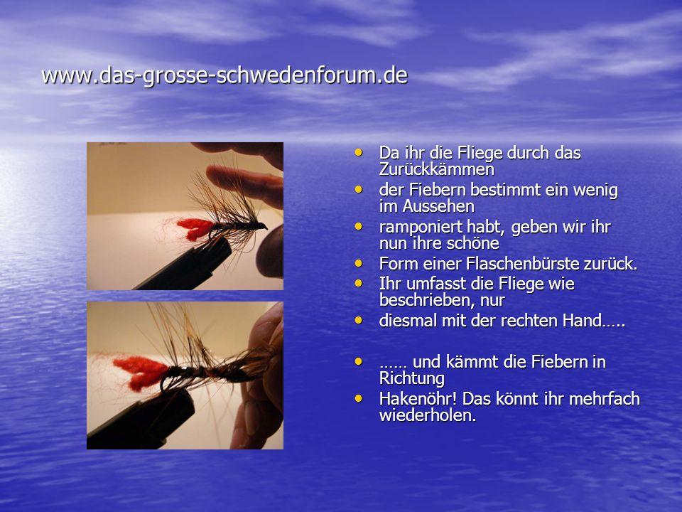 www.das-grosse-schwedenforum.de Da ihr die Fliege durch das Zurückkämmen. der Fiebern bestimmt ein wenig im Aussehen.
