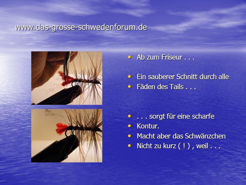 www.das-grosse-schwedenforum.de Ab zum Friseur . . .