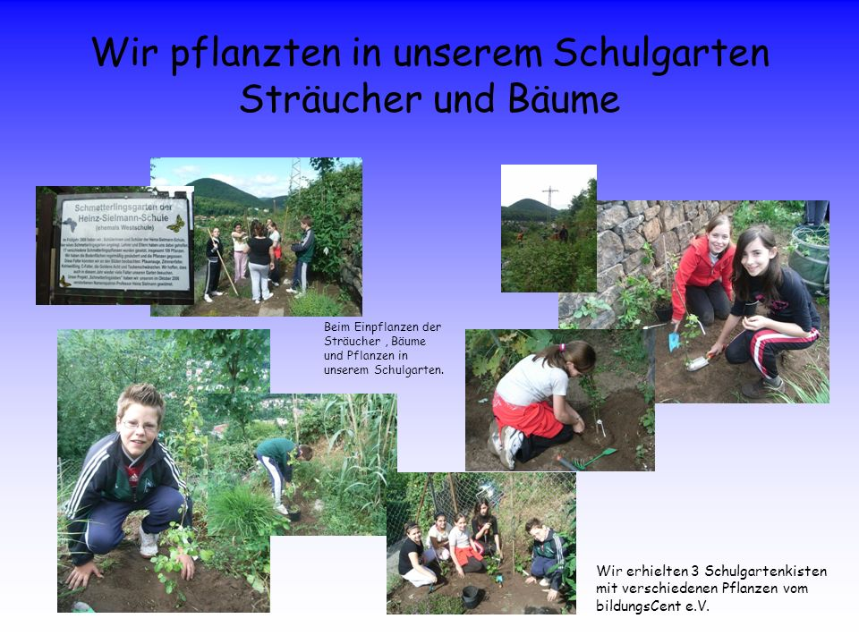 Wir pflanzten in unserem Schulgarten Sträucher und Bäume