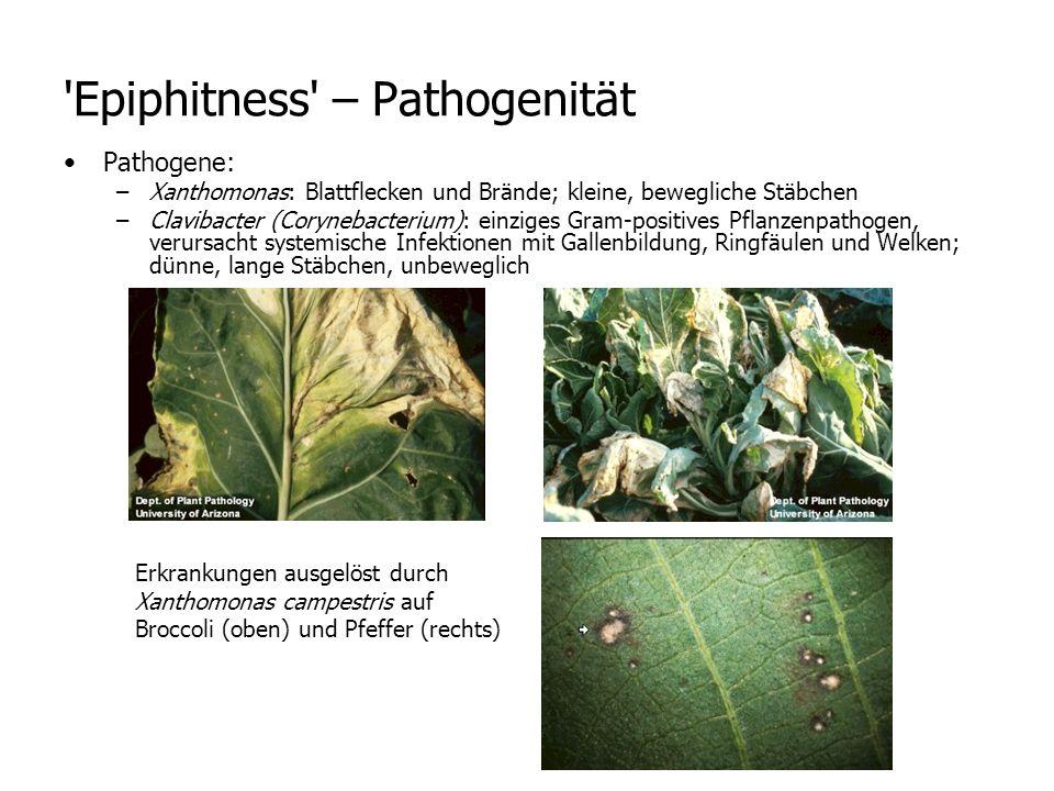 Epiphitness – Pathogenität
