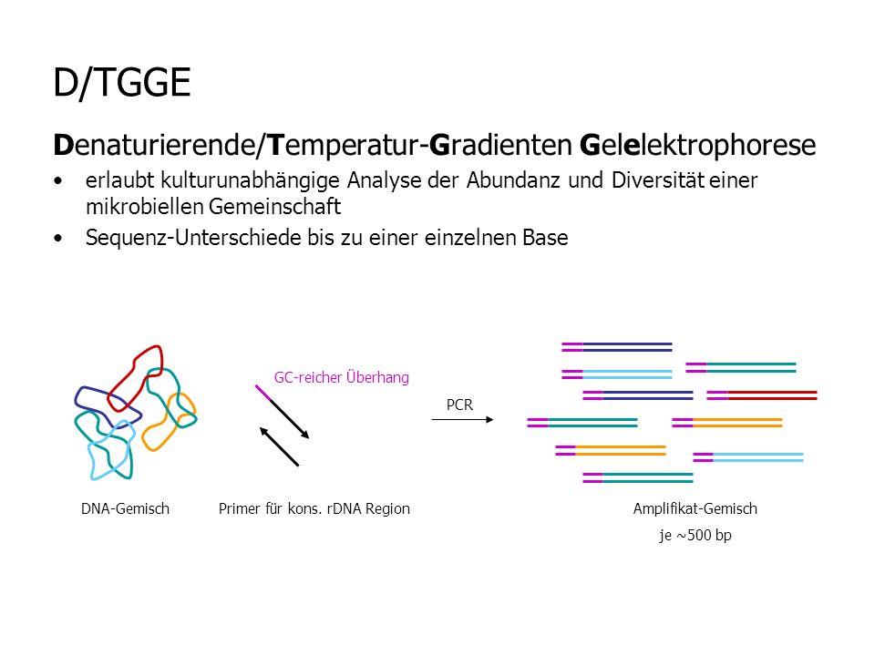 D/TGGE Denaturierende/Temperatur-Gradienten Gelelektrophorese