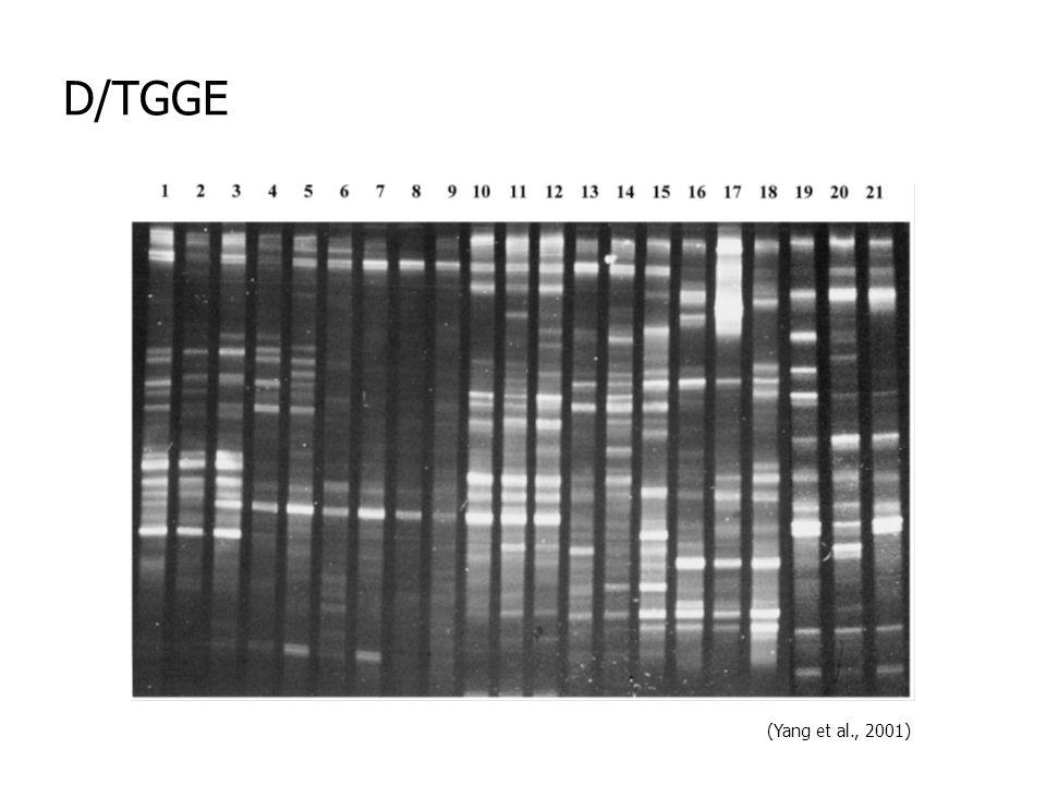 D/TGGE (Yang et al., 2001)