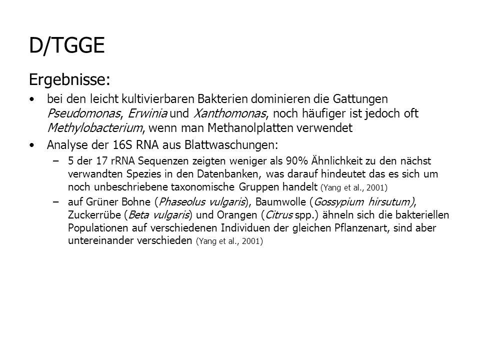 D/TGGE Ergebnisse: