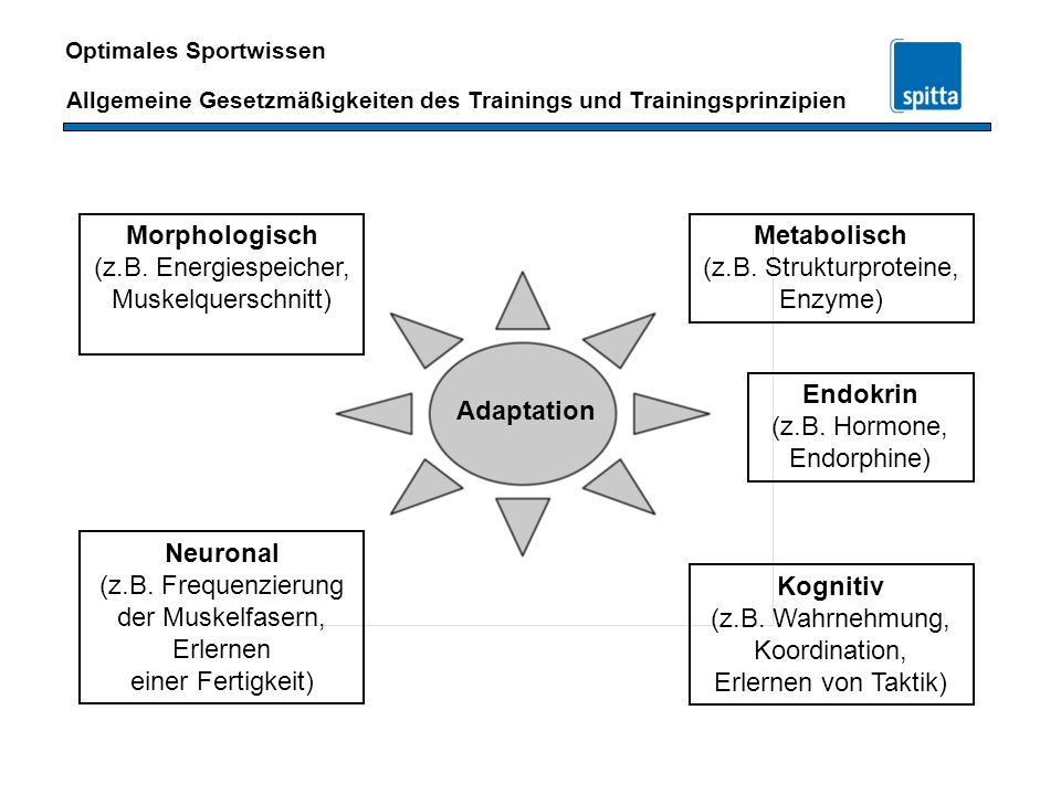 Morphologisch (z.B. Energiespeicher, Muskelquerschnitt) Metabolisch. (z.B. Strukturproteine, Enzyme)