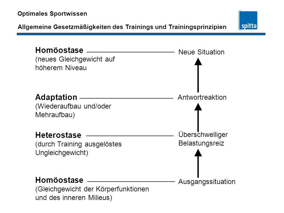 Homöostase Adaptation Heterostase Homöostase Neue Situation