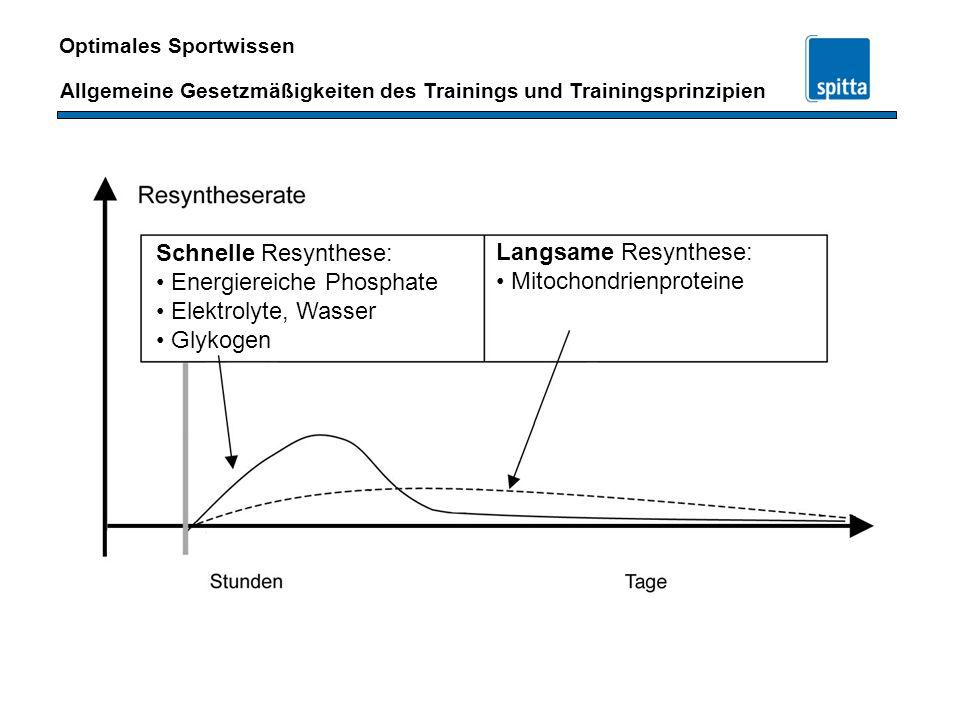 Schnelle Resynthese: Energiereiche Phosphate. Elektrolyte, Wasser. Glykogen. Langsame Resynthese: