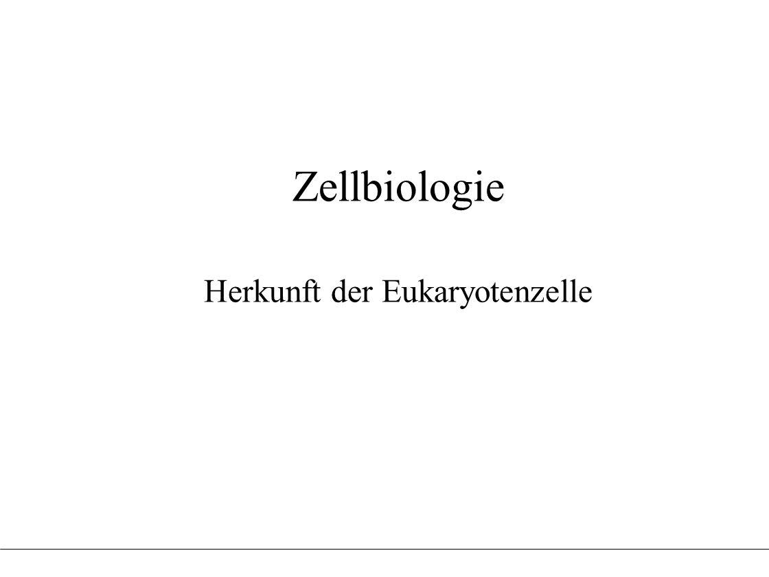 Herkunft der Eukaryotenzelle
