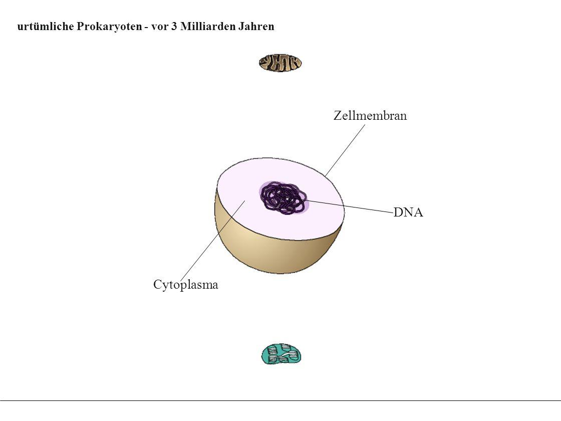 urtümliche Prokaryoten - vor 3 Milliarden Jahren