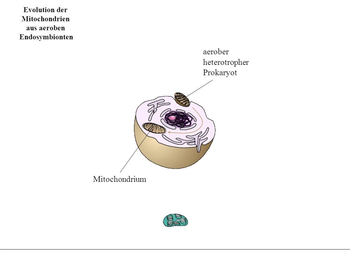 Evolution der Chloroplasten aus Fotosynthese betrei-