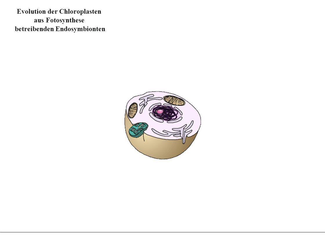 Evolution der Chloroplasten betreibenden Endosymbionten