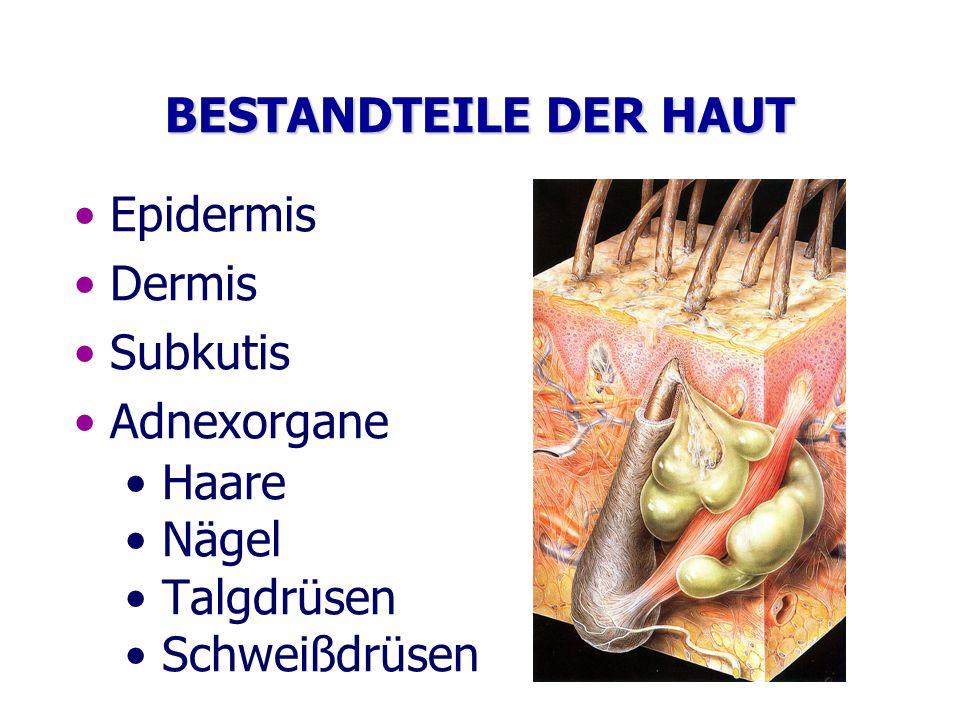 BESTANDTEILE DER HAUT Epidermis. Dermis. Subkutis.