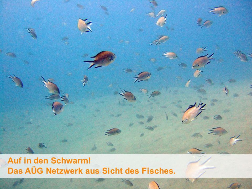 Auf in den Schwarm! Das AÜG Netzwerk aus Sicht des Fisches.