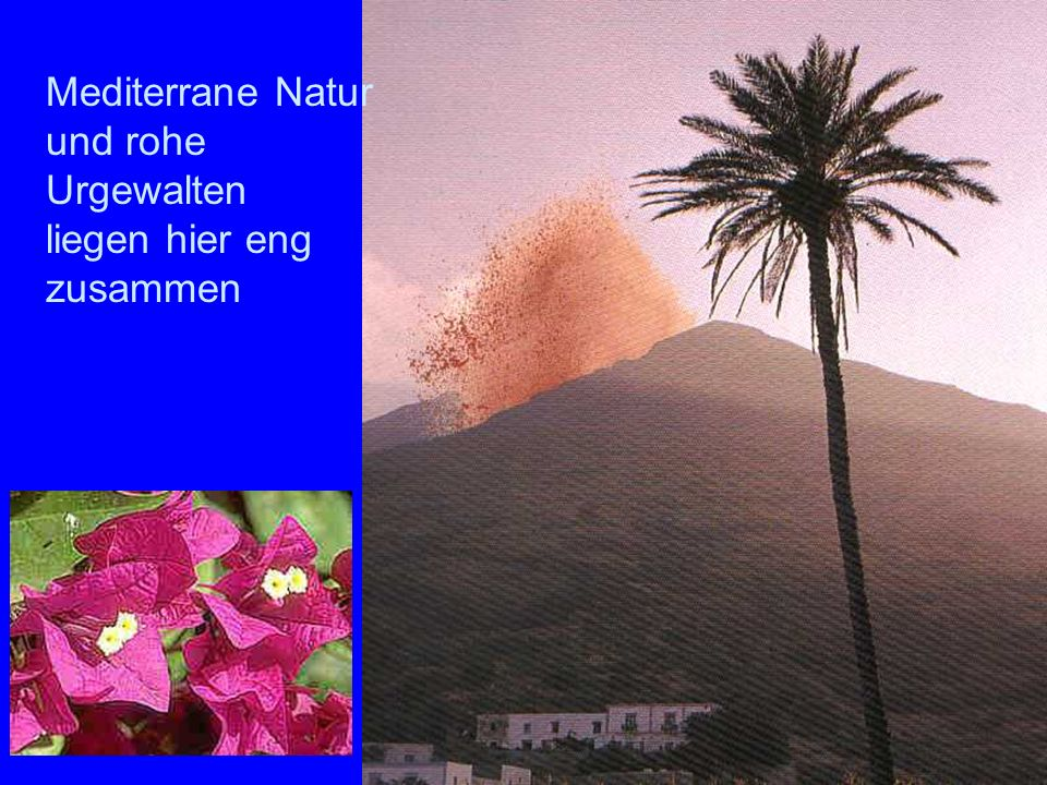 Sromboli Natur Mediterrane Natur und rohe Urgewalten liegen hier eng