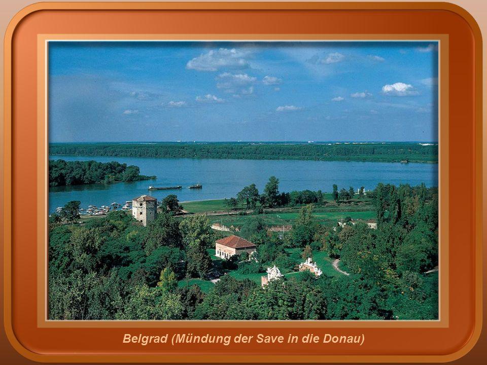 Belgrad (Mündung der Save in die Donau)