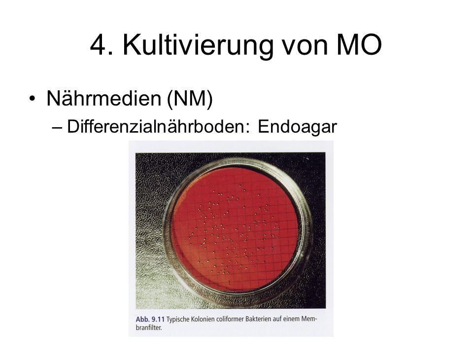 4. Kultivierung von MO Nährmedien (NM) Differenzialnährboden: Endoagar