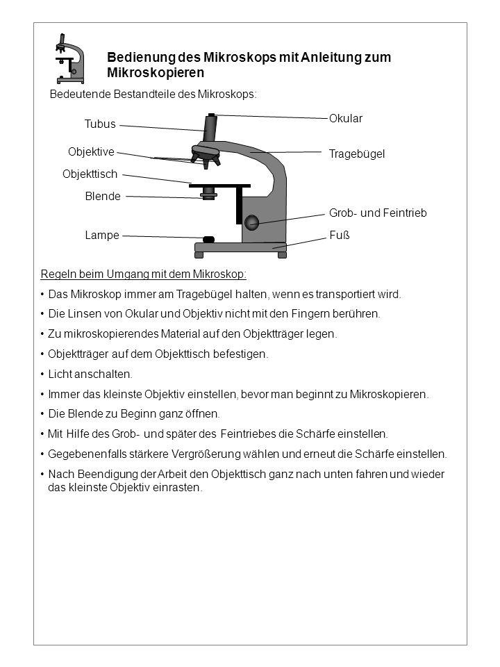 Bedienung des Mikroskops mit Anleitung zum Mikroskopieren