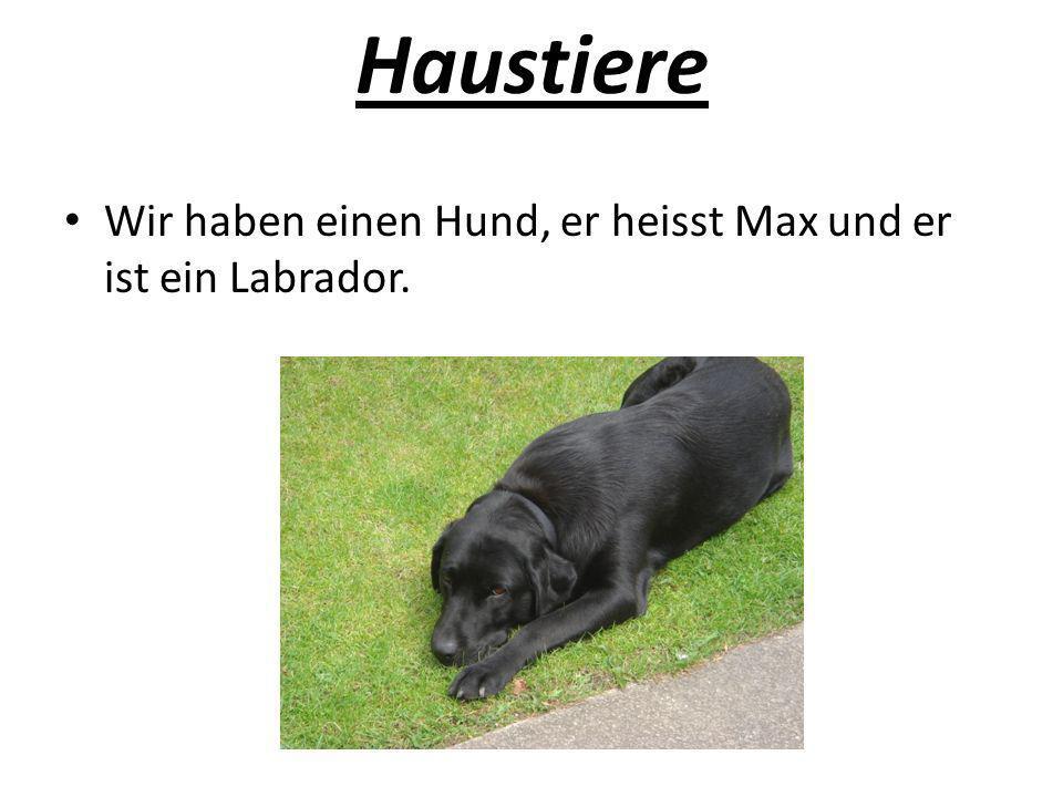 Haustiere Wir haben einen Hund, er heisst Max und er ist ein Labrador.