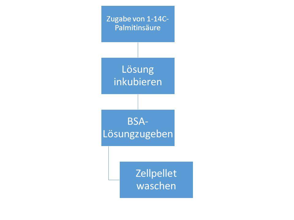 Zugabe von 1-14C-Palmitinsäure