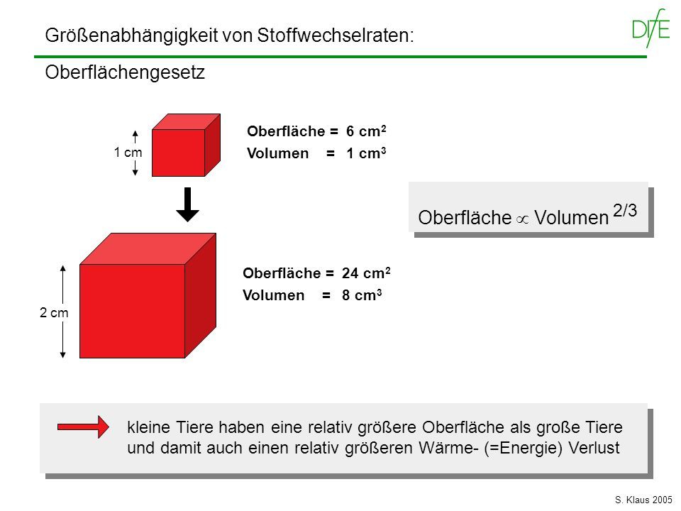 Größenabhängigkeit von Stoffwechselraten: Oberflächengesetz