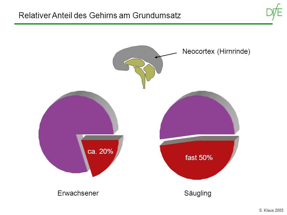 Relativer Anteil des Gehirns am Grundumsatz