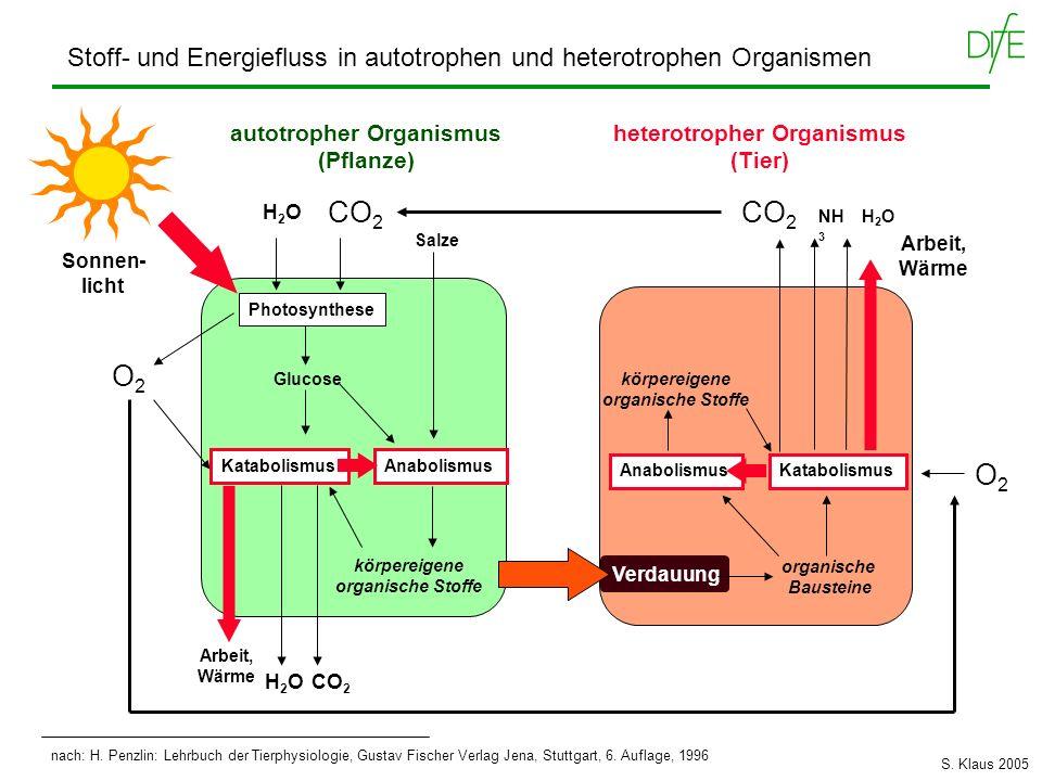 heterotropher Organismus (Tier) autotropher Organismus (Pflanze)