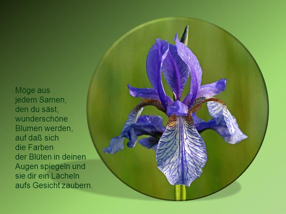 Möge aus jedem Samen, den du säst, wunderschöne. Blumen werden, auf daß sich. die Farben. der Blüten in deinen.