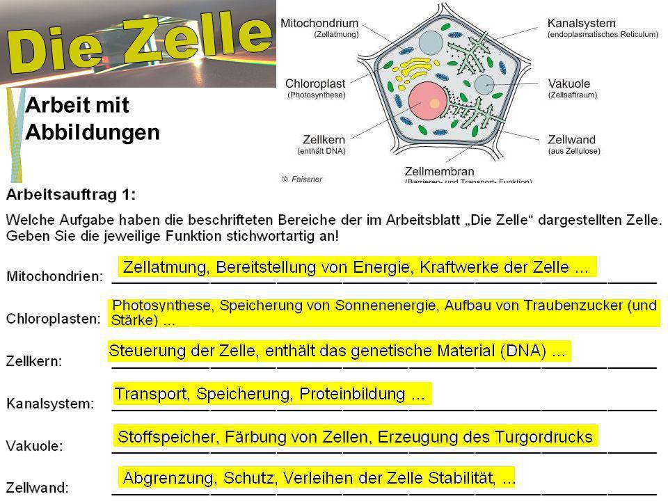 Die Zelle Arbeit mit Abbildungen