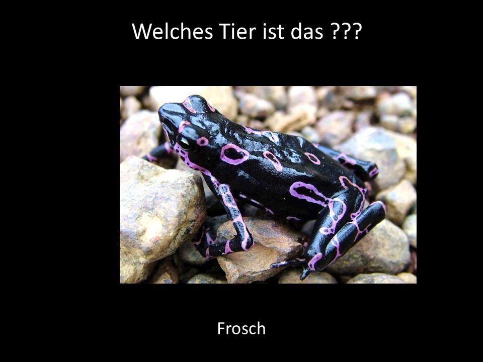 Welches Tier ist das Frosch