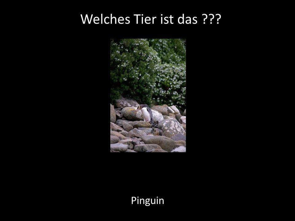 Welches Tier ist das Pinguin