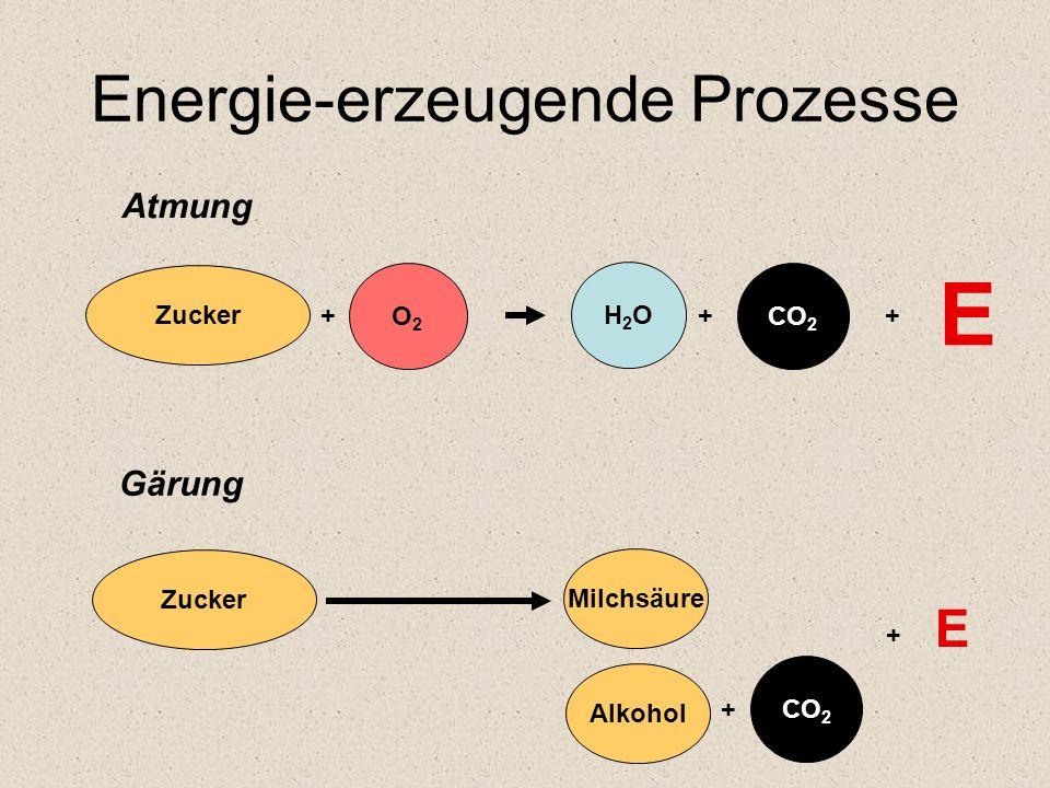 Energie-erzeugende Prozesse