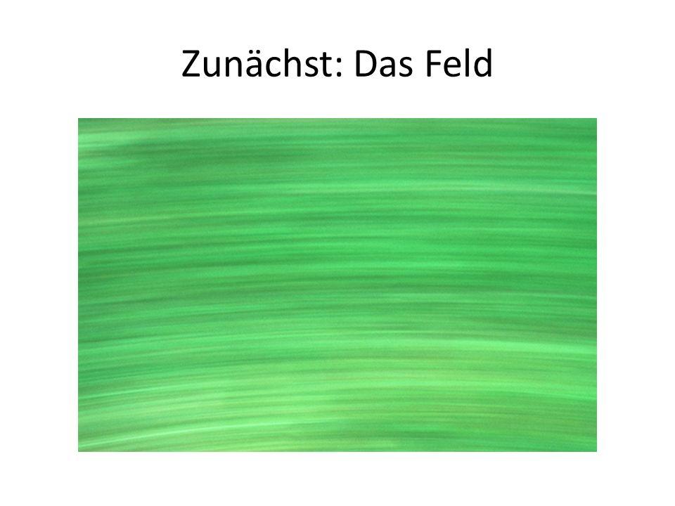 Zunächst: Das Feld