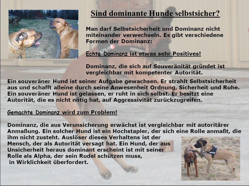 Sind dominante Hunde selbstsicher