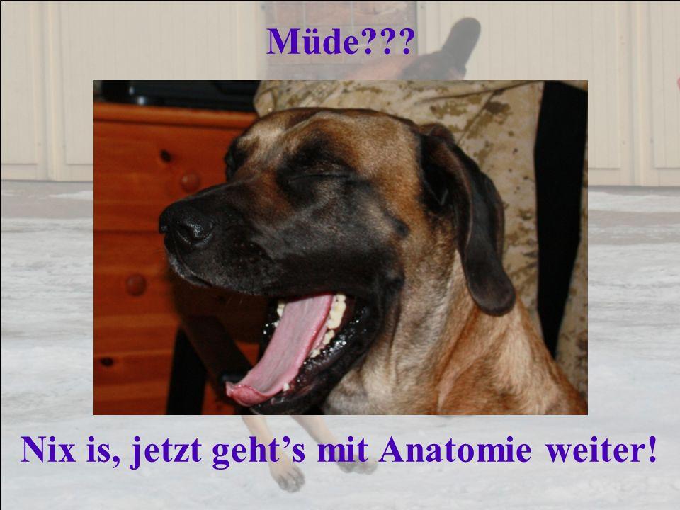 Müde Nix is, jetzt geht's mit Anatomie weiter!