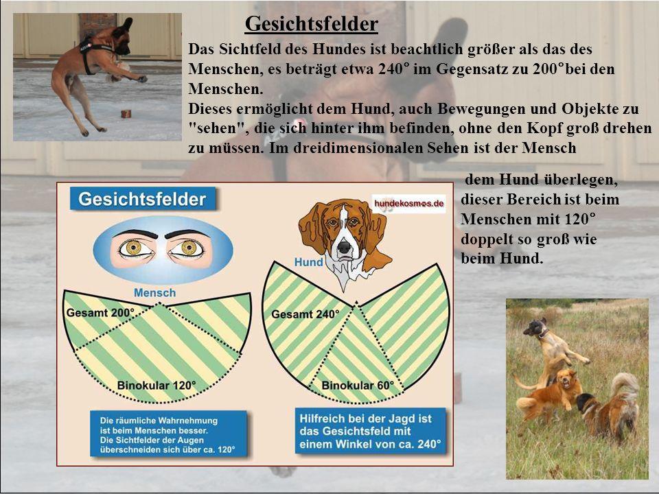 Gesichtsfelder Das Sichtfeld des Hundes ist beachtlich größer als das des Menschen, es beträgt etwa 240° im Gegensatz zu 200°bei den Menschen.