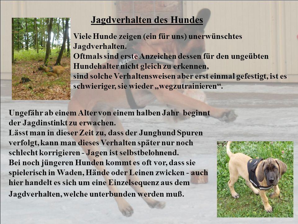 Jagdverhalten des Hundes