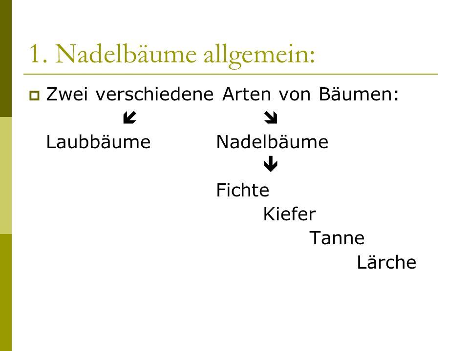 1. Nadelbäume allgemein: