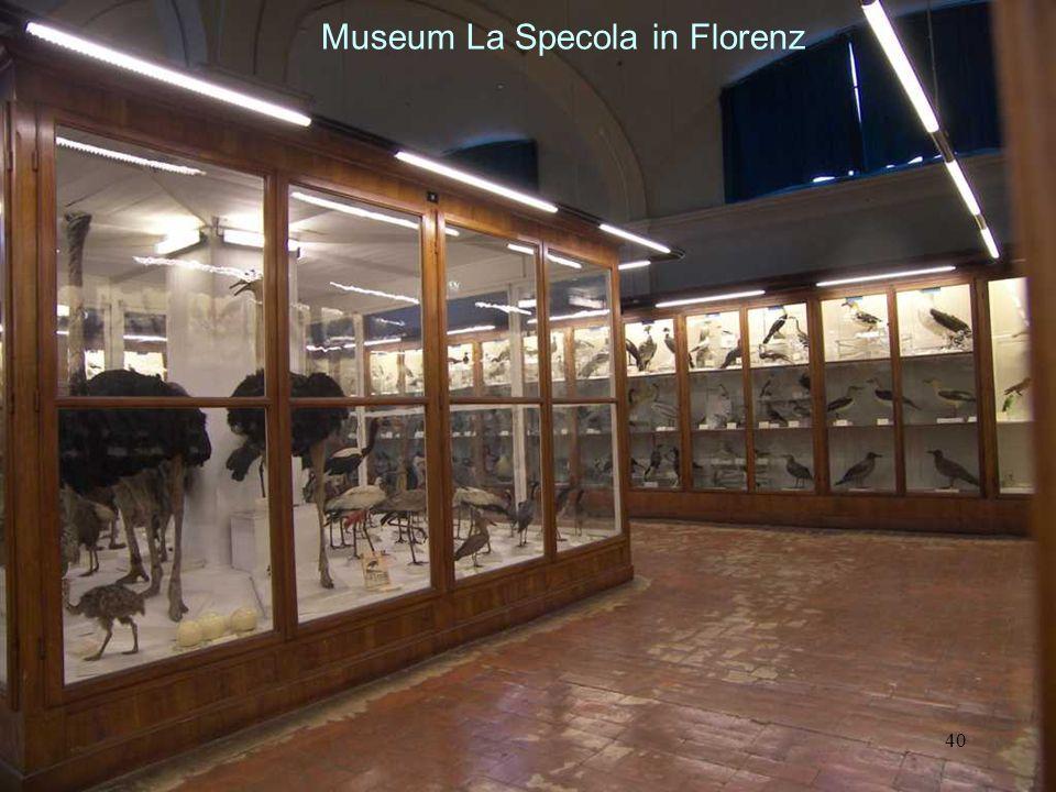 Museum La Specola in Florenz