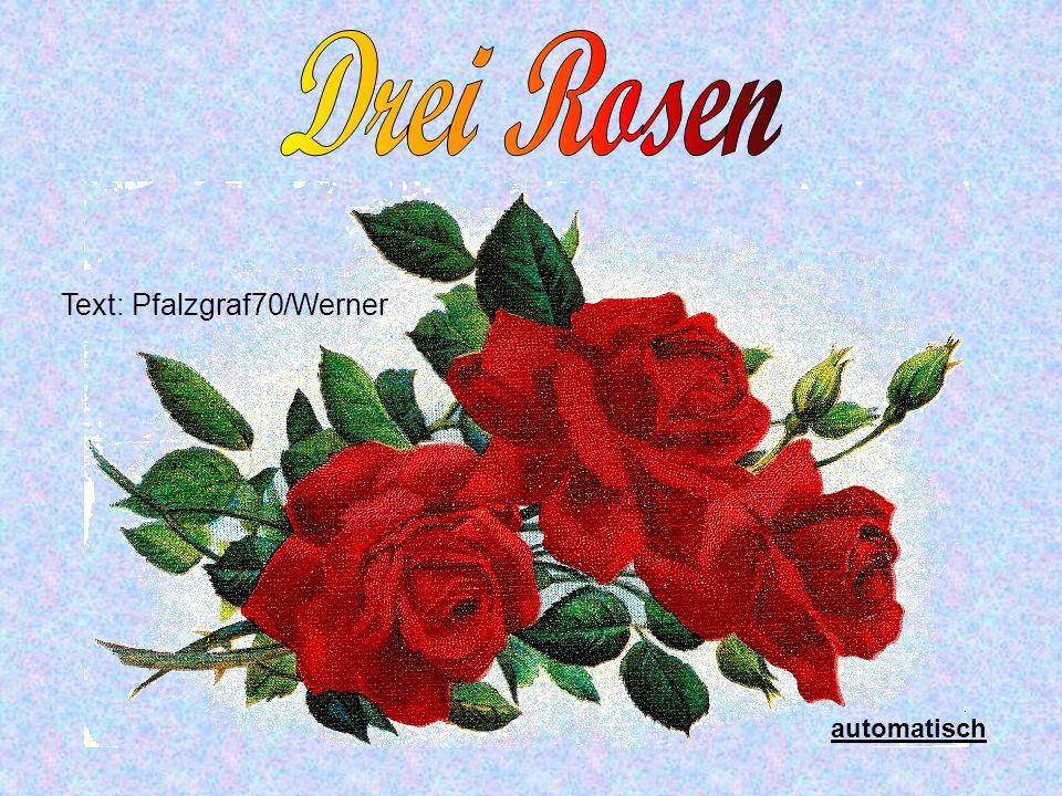Text: Pfalzgraf70/Werner