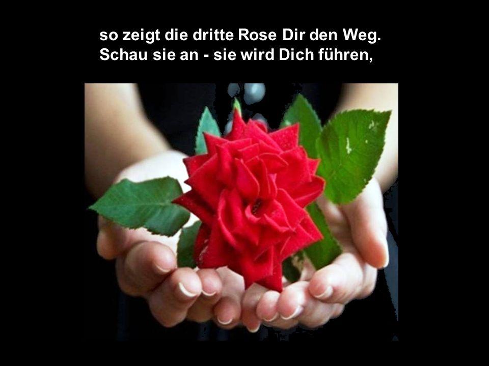 so zeigt die dritte Rose Dir den Weg