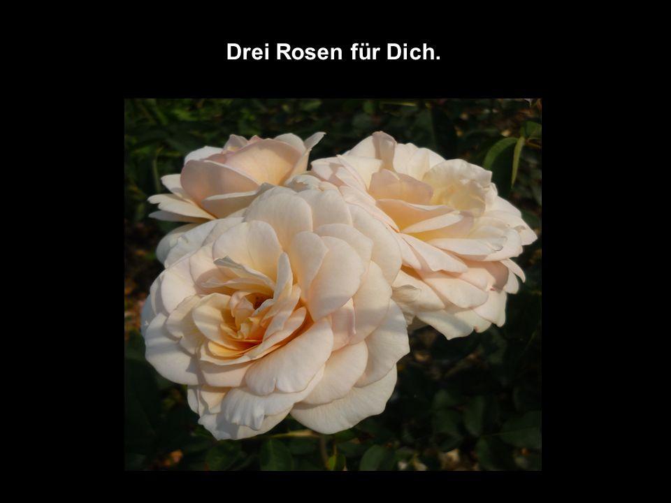 Drei Rosen für Dich.