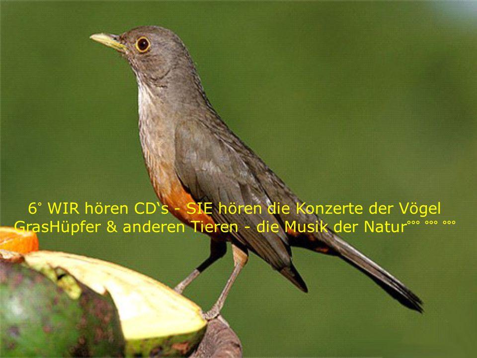 6° WIR hören CD's - SIE hören die Konzerte der Vögel GrasHüpfer & anderen Tieren - die Musik der Natur°°° °°° °°°