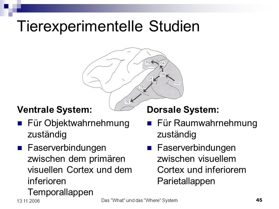 Tierexperimentelle Studien