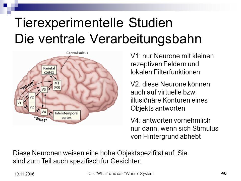 Tierexperimentelle Studien Die ventrale Verarbeitungsbahn