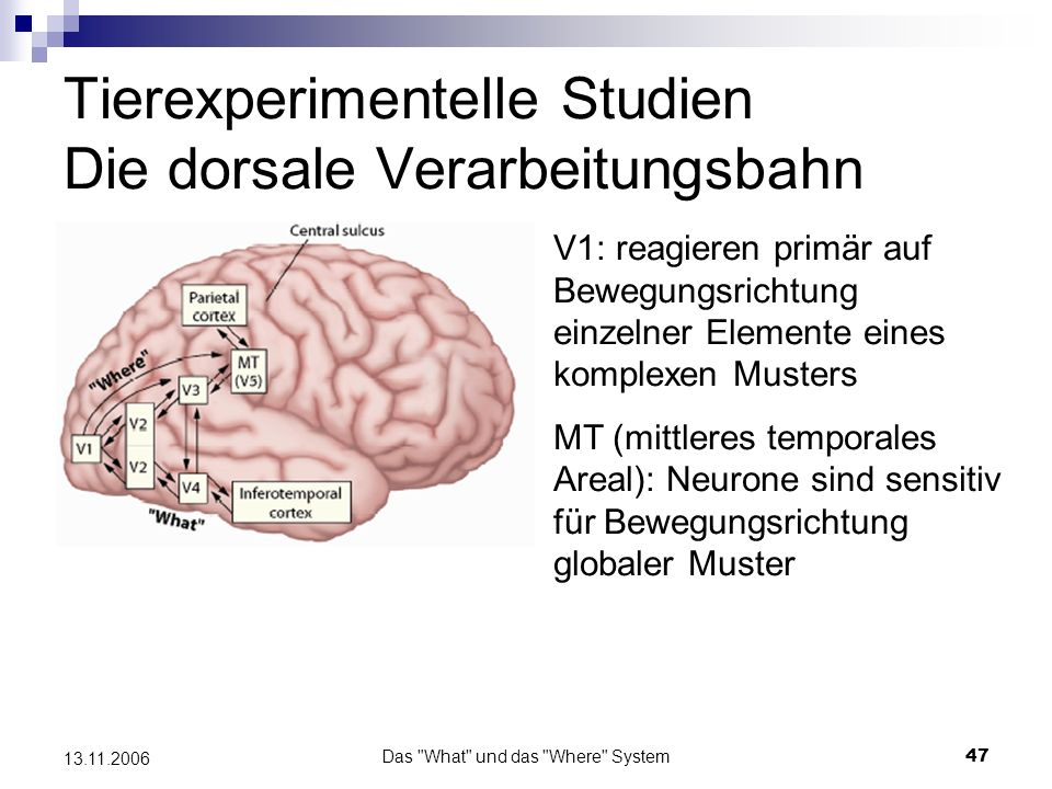 Tierexperimentelle Studien Die dorsale Verarbeitungsbahn