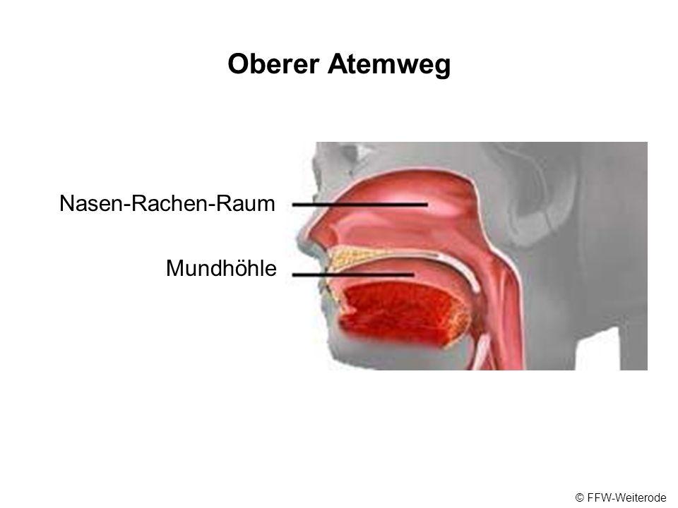 Oberer Atemweg Nasen-Rachen-Raum Mundhöhle © FFW-Weiterode